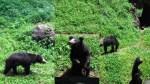 beruang Madu, Lihat deh Action nya Lucu banget yah :-$