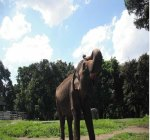 Gajah nya Riang Sekali yah