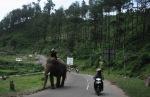 Si gajah dengan Tuan nya asyik sedang berjalan-jalan poto dulu yah Om Gajah :P